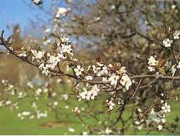 blommetræer sorter